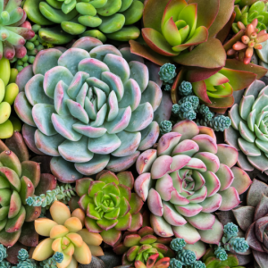 Pink Picasso Such A Succulent Paint by Number Kit