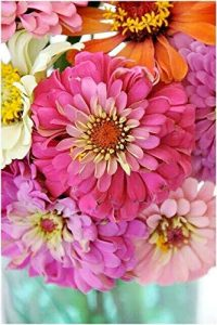 Pink Picasso Zealous Zinnia Paint by Number Kit